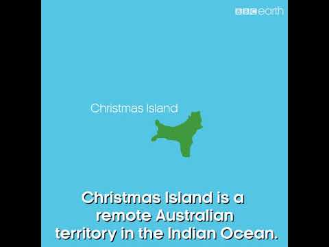 BBC #Our Blue Planet Green Turtle on Christmas Island