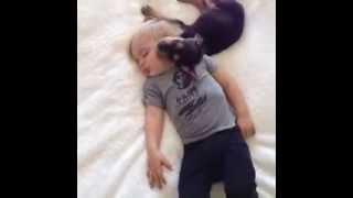 sweetest dreams, darlings  FUNNY VINE!   cute dog and cute little girl