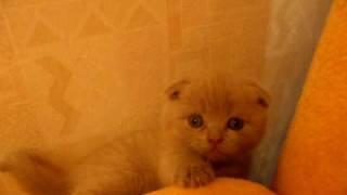 Котятам 1 месяц