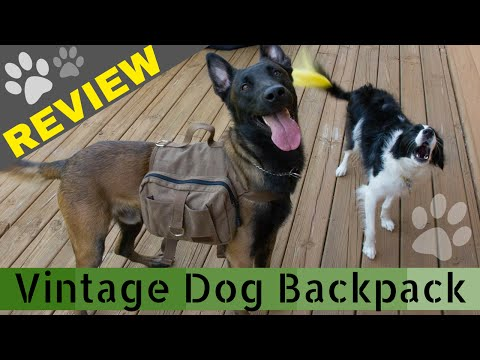 #OneTigris Cotton Canvas Dog Pack for Hiking and Camping REVIEW (Doggy Backpack)