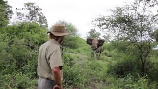 「何もしないよ。だからどうか静かに去ってほしい」アフリカゾウと冷静に対峙するサファリガイド