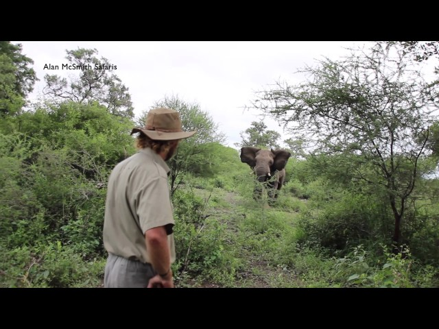 Alan McSmith elephant encounter1