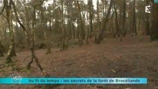 reportage région direction la forêt de brocéliande