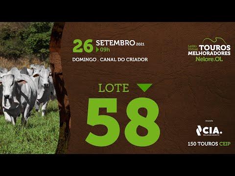LOTE 58 - LEILÃO VIRTUAL DE TOUROS 2021 NELORE OL - CEIP