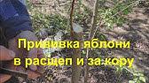 Урожай зерновых 2018 в России прогнозы - видео уборка урожая - YouTube