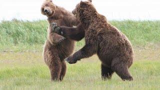 documentary discovery brown bears documentaries 2014