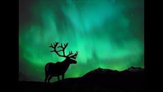 Северный олень - символ золотого века.