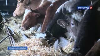 Молочная мини-ферма