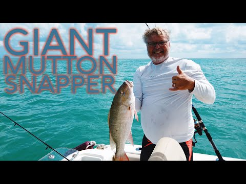 Mutton Snapper Fishing In Florida - Bottom Fishing
