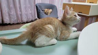 [고양이] 그리고 마늘까기 #15