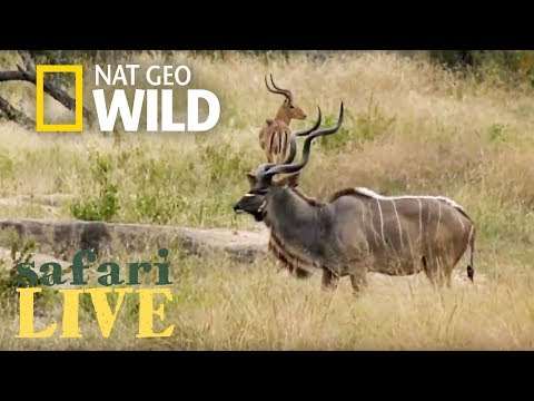Safari Live - Day 123 | Nat Geo Wild
