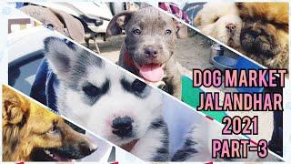 Wholesale Dog Market at Jalandhar Dog show 2021 February  PART 3 | Gold Medal Kennels