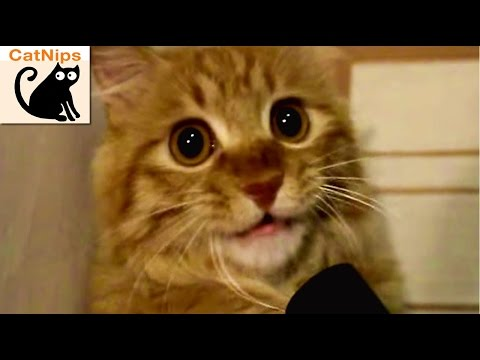 Curious Kitty Gets Mouth Stuck In Vacuum Cleaner | CatNips