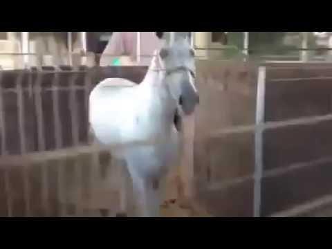 Автоматическая водилка для лошадейиз YouTube · Длительность: 23 с