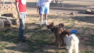 Puppy Training - Teach Your Puppy To Pay Attention