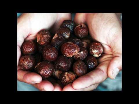 Eco Nuts: Soapberries