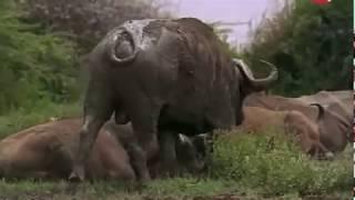 Африка. Жизнь саванны. Интересный и познавательный фильм.