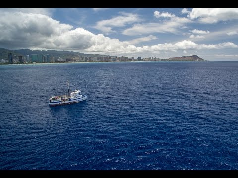 Tuna Fishing In Hawaii