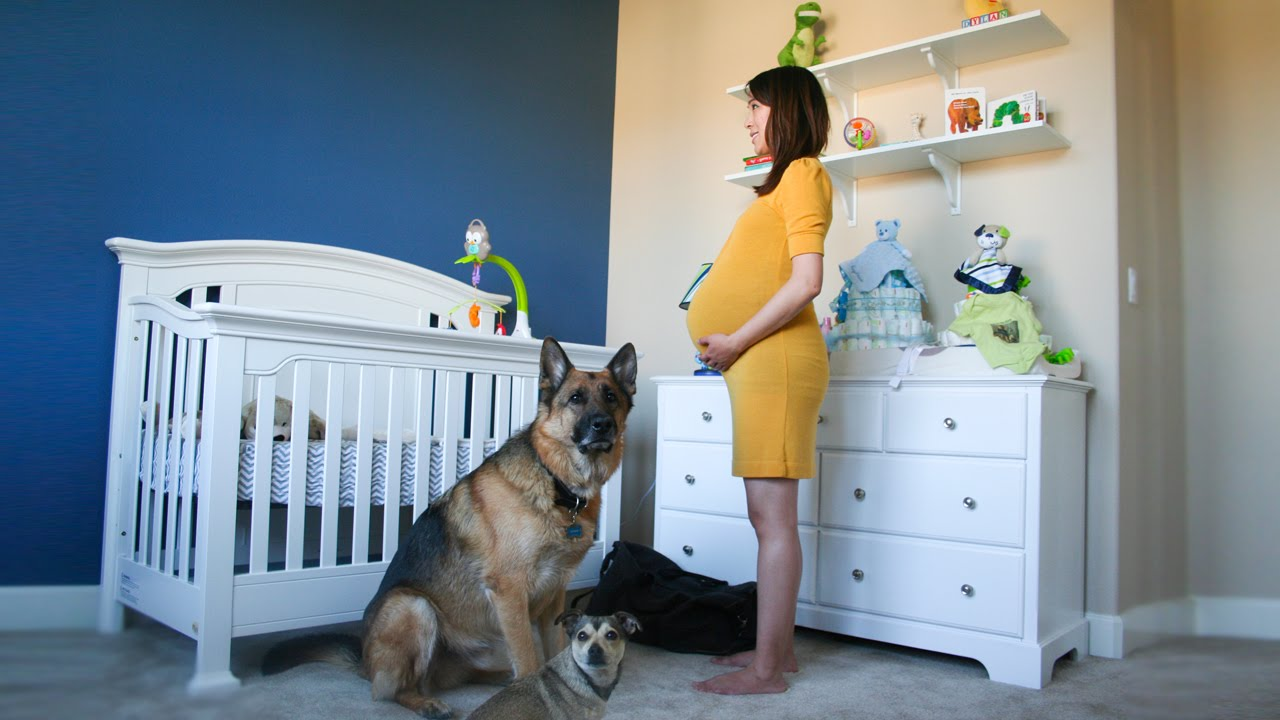 time lapse pregnant to baby in 90 seconds photo a day