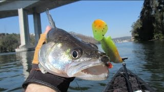 Fishing for Zander / Walleye with Savage Gear Fat Ttail - Pesca aos Luciopercas com SG Fat Ttail