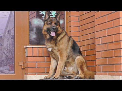Собаки и щенки в Екатеринбурге Фото и цены E1ОБЪЯВЛЕНИЯ