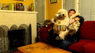 Cloverton The Deaf Dog - Camilla