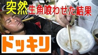 【ドッキリ】生きたままの魚を突然口の中に放り込む!~スペデリ本社で超豪華な鍋パーティ [後編]~