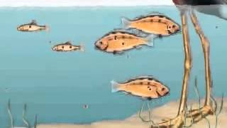 Bioaccumulation and Biomagnification Animation 2