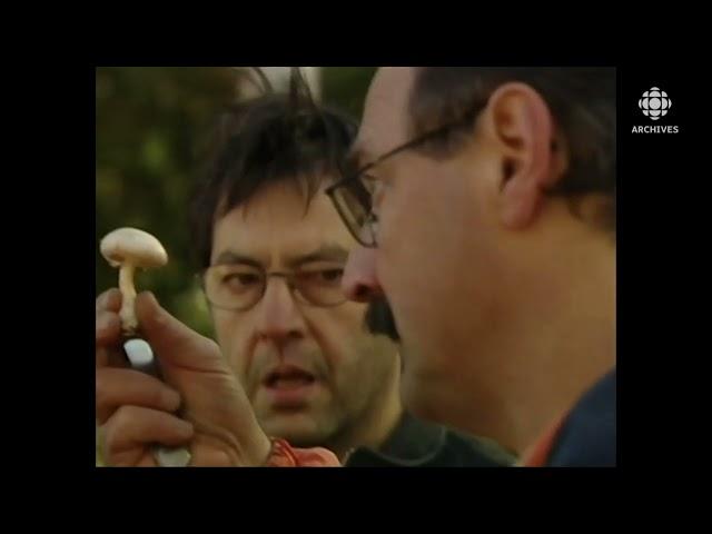 En 2003, activités d'un groupe d'amateurs de champignon à Sudbury