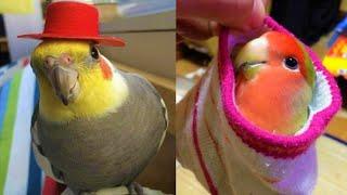 Funny Parrots Videos Compilation - Cute Parrot Talking #45
