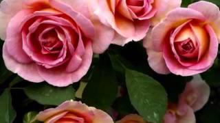 Красивая греческая музыка(, 2016-02-11T08:50:33.000Z)
