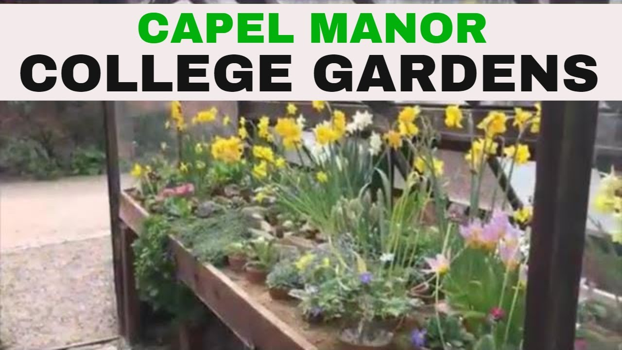 ✅ Capel Manor College Gardens Reopens on 11th July 2020 and a Revisit from 2019.