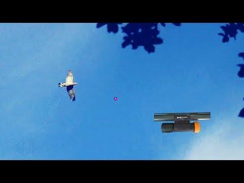 Paloma Torcaz SHOTKAM (Cimbel) // Pigeon SHOTKAM (Decoys)