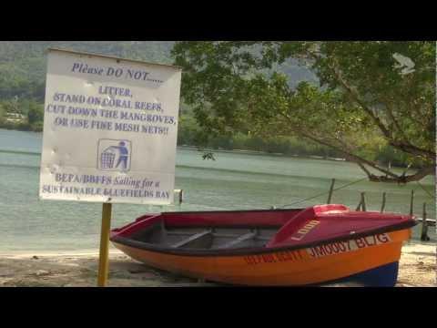 Bluefields Bay Fish Sanctuary, Jamaica.mov