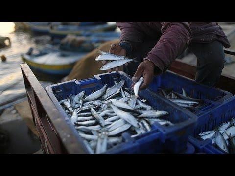 EU Fishing Reform Aims To Tackle Dwindling Stocks