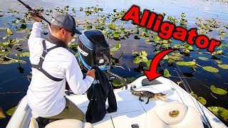 Accidentally Catching and Releasing ALLIGATOR!! (Dangerous)