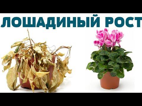 Вопрос: Через какое время после подкормки удобрением зацветают комнатные цветы?