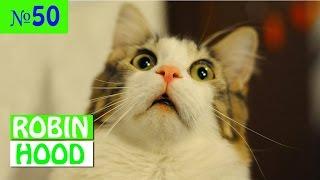 ПРИКОЛЫ 2017 с животными. Смешные Коты, Собаки, Попугаи // Funny Dogs Cats Compilation. Март №50