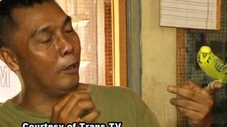 vuclip REPORTASE TAMAN SATWA BURUNG PARKIT