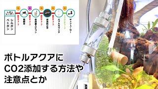 ボトルアクアリウムにCO2添加する方法や注意点、スッキリ見せるポイントなど #アクアリウム