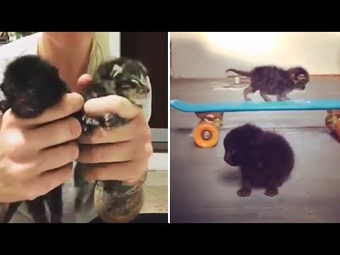 Rescue Abandoned Little Kittens Only One Week Old