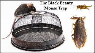 the-black-beauty-mouse-roach-cricket-water-bug-trap-mousetrap-monday