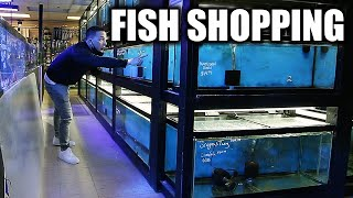 Shopping for AQUARIUM FISH   The king of DIY