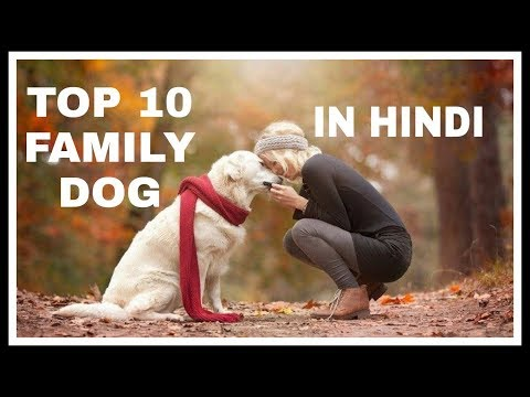 Top 10 Family Dogs In Hindi | PET INFO