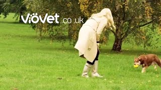 VioVet TV Advert 2018