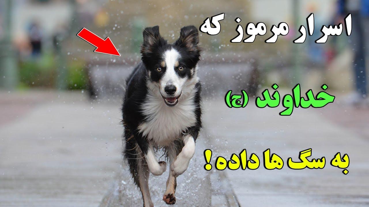 سبحان الله - اسرار مرموز و شگفت انگیز که خداوند (ج) به سگ ها داده است !   ISA TV