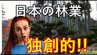 【海外の反応】日本の伝統的な林業の技術台杉に外国人「すごい独創的だ!」と話題沸騰!?【感動心をゆさぶるチャンネル】