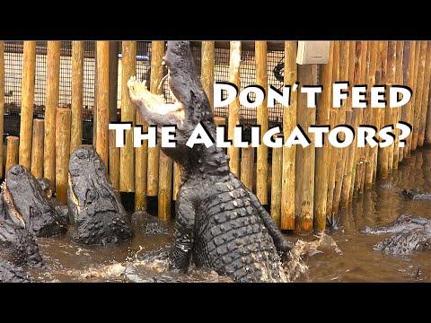 St Augustine ~ Alligator Farm & More