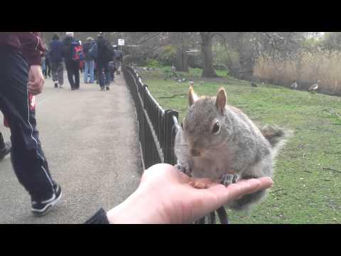 Squirrel in hand St. James Park.