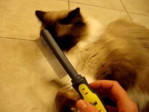 Best brush for ragdoll cat